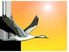 costadulce logo